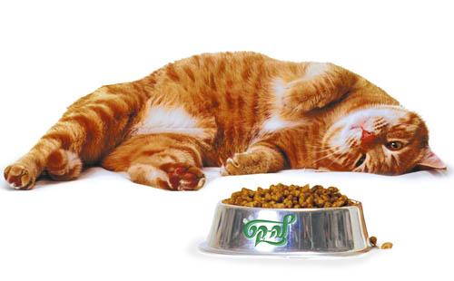 Что бы съела ваша кошка?