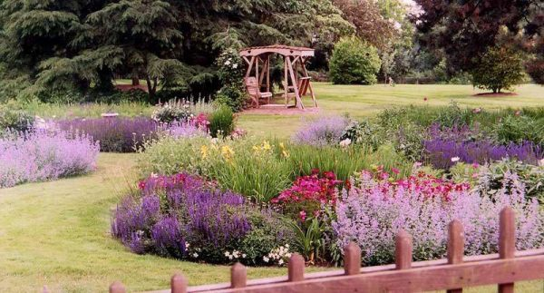 Дизайн верескового сада