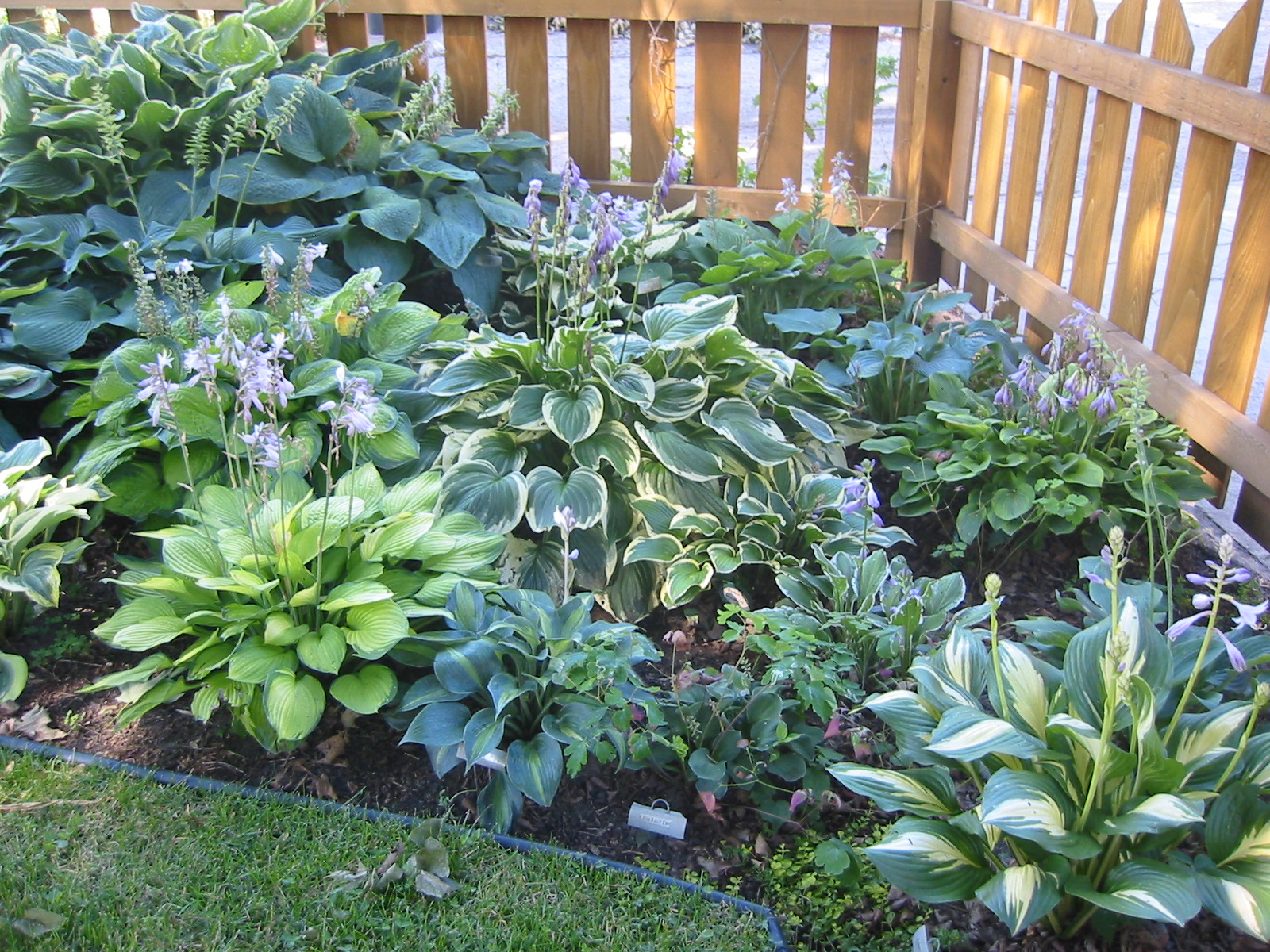 Тенелюбивые растения для ландшафтного дизайна