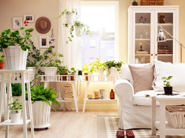 Озеленение квартиры