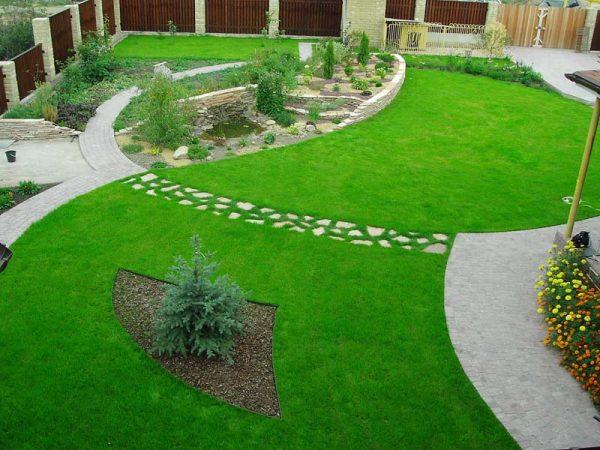 Травы, рекомендуемые для устройства газона в условиях затенения