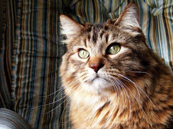 Особенности кормов для старых кошек