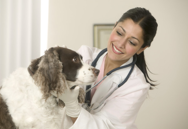 Профессия ветеринара