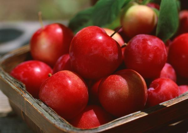 Куда девать урожай яблок после Яблочного спаса?