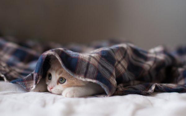 Как согреться и сохранить тепло в доме, пока не включено центральное отопление