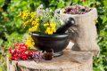 Лекарства, лекарственные травы или народные средства: чем поправить здоровье?