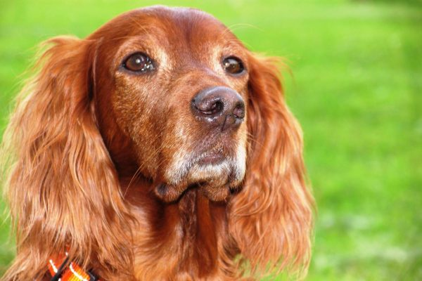 Меры профилактики потери собаки: от дрессировки до ошейника