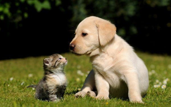 Вложения времени и денег в содержание кошек и собак: что нужно знать до покупки питомца