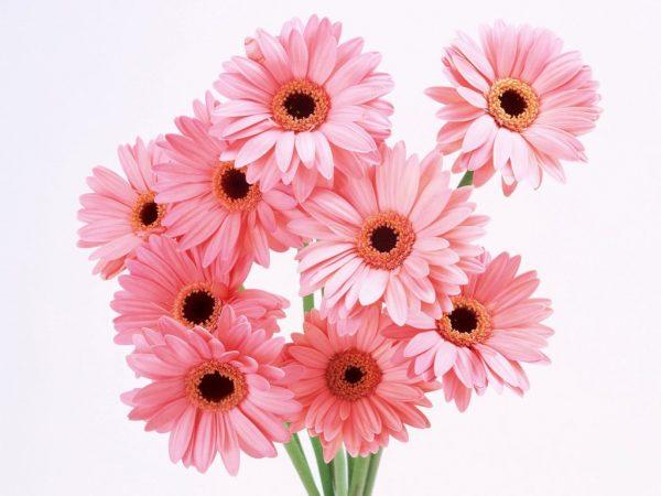cvety-na-prazdnik