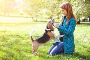 Ответственность за приобретение собаки или о чем нужно подумать заранее