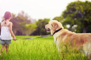 Домашние питомцы и их роль в воспитании ребенка: о щенках и не только
