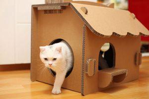 Кошкин дом — как он должен выглядеть