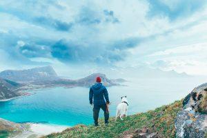 Путешествие с собакой: на какие детали обратить внимание