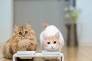 Какой деликатес выбрать для своей кошки сегодня?