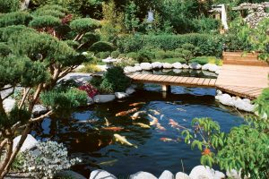 Рыбы в домашнем пруде. Особенности содержания