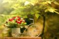 Доставка цветов – популярная современная услуга, которая дарит любовь