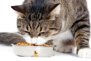 Основные правила содержания кошек и котов