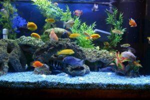 Когда нужно чистить аквариум?
